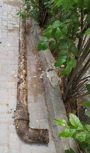 צינור עם שורשים בביוב